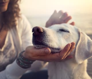 Despite a lack of research, many are turning to pot to treat ailing pets.