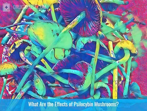 Effects of Psilocybin Mushrooms