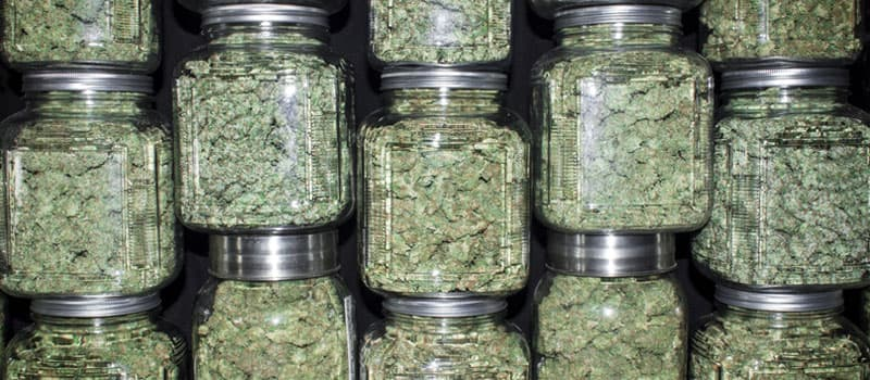 Questions for an informative research paper on marijuana?